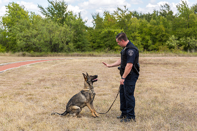 In a demonstration of her obedience training, Valet listens to instruction from Officer Allen to stay in positon.